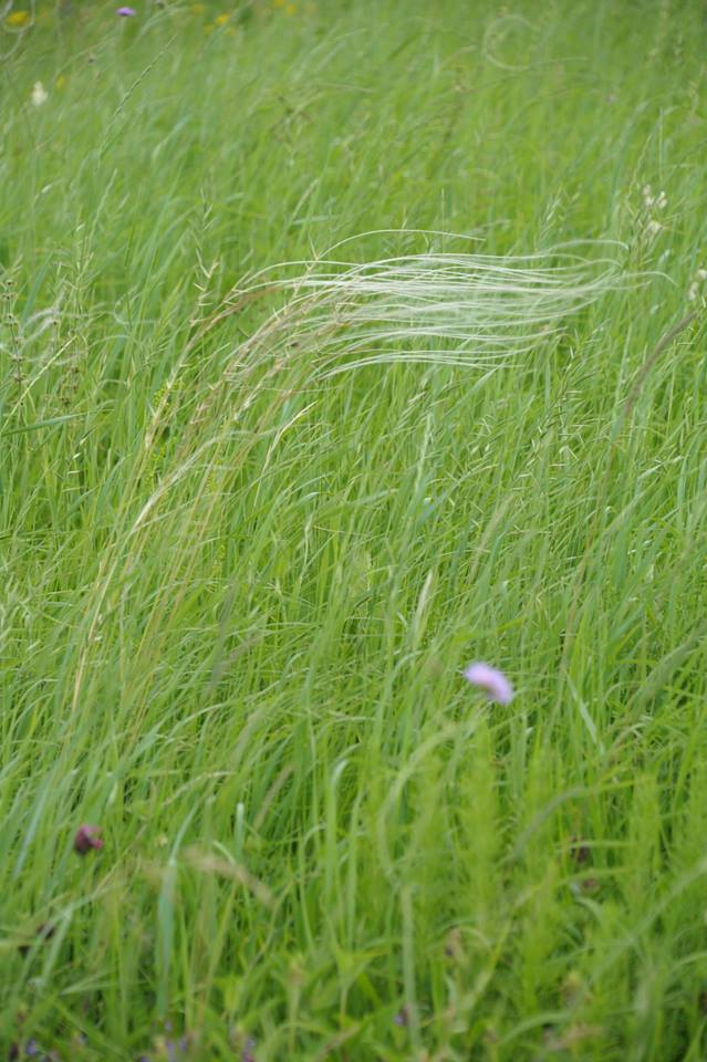 plants_world_38.png
