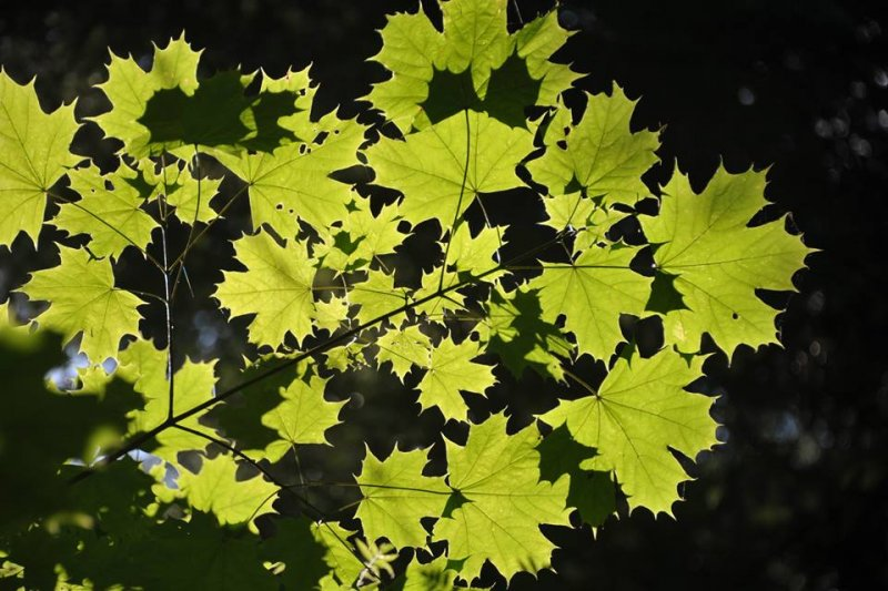 plants_world_30.png