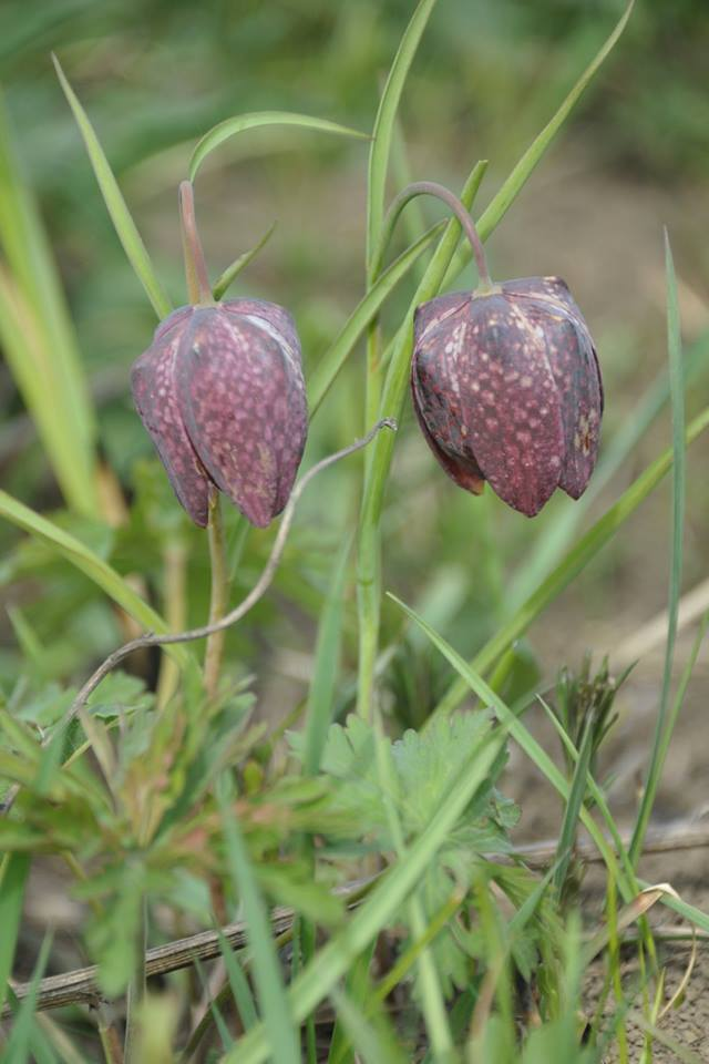plants_world_42.png